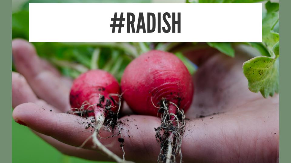 Health Benefits Of Radish